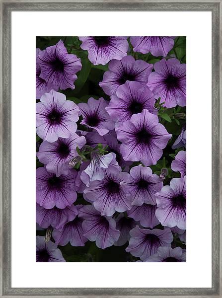 Cascade In Violet Framed Print
