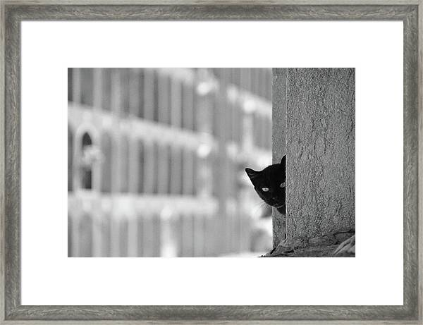 Cat In Cemetery Framed Print by All Copyrights Reserved By Harris Hui