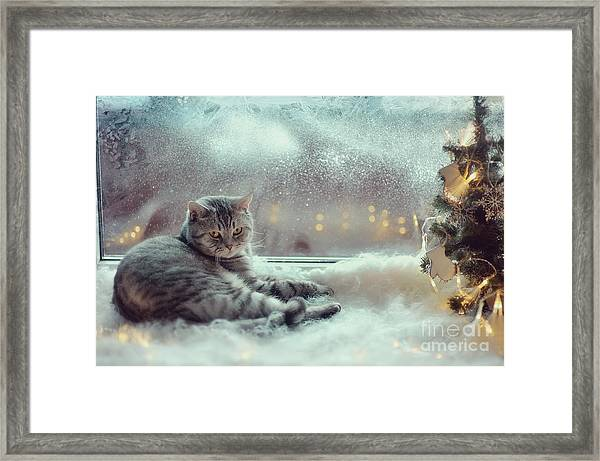 Cat In The Winter Window Framed Print