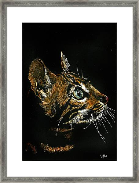 Cat Looking Up Framed Print