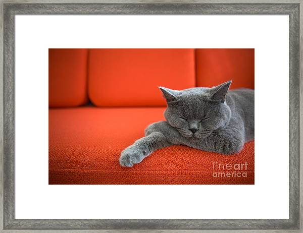Cat Relaxing On The Couch Framed Print
