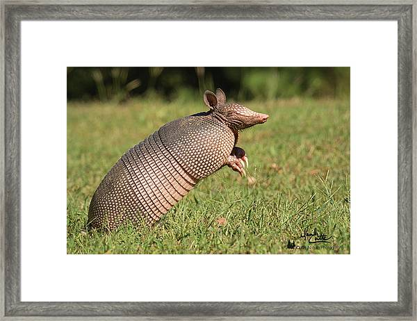 Catching A Scent Framed Print