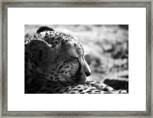 Framed Print featuring the photograph Catnap by Whitney Goodey