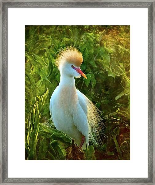 Cattle Egret At Sunset Framed Print