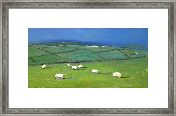 Celtic Sheep Framed Print