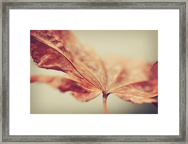 Central Focus Framed Print