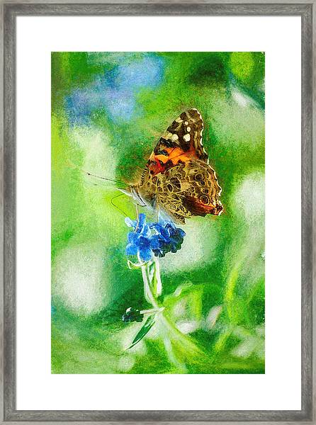 Chalky Painted Lady Butterfly Framed Print