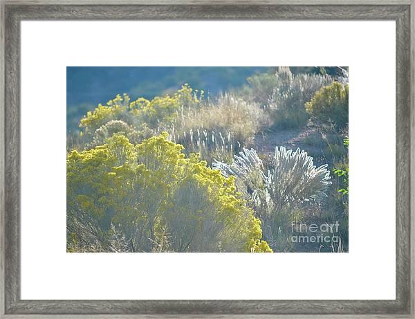 Chamisa Framed Print