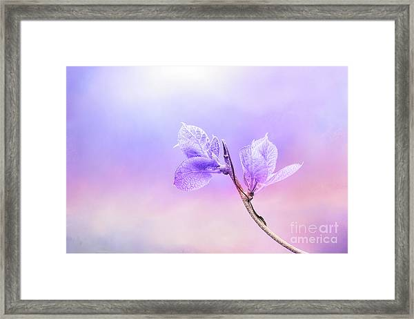 Charming Baby Leaves In Purple Framed Print