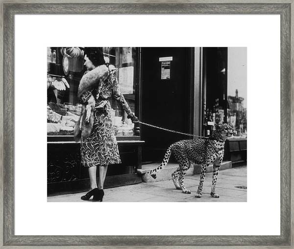 Cheetah Who Shops Framed Print