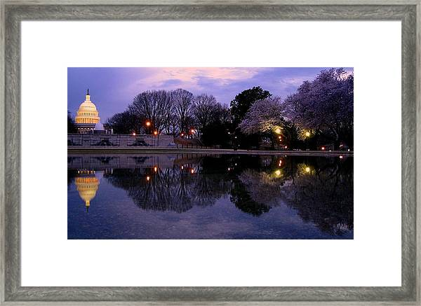 Cherry Blossom At Capitol Hill Framed Print by Patrick Yuen