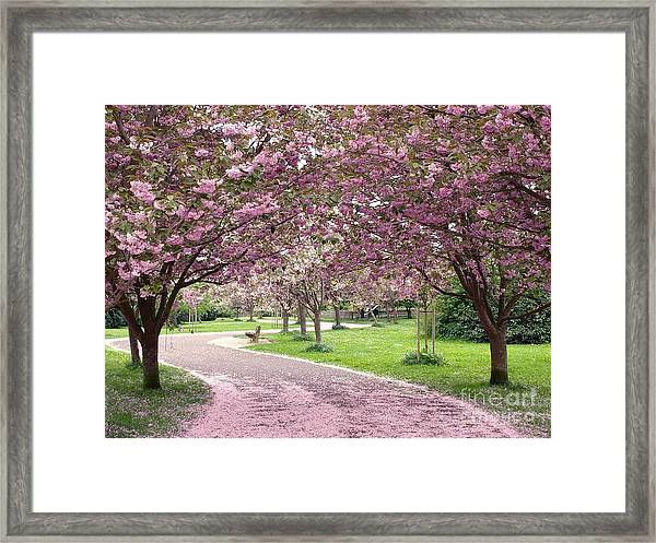 Cherry Blossom In Spring Framed Print
