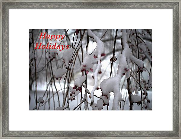Cherry Blossoms In Snow Framed Print