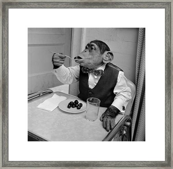 Cherry Chimp Framed Print by Vecchio