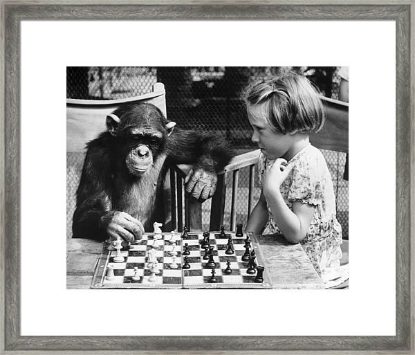 Chess Chimp Framed Print
