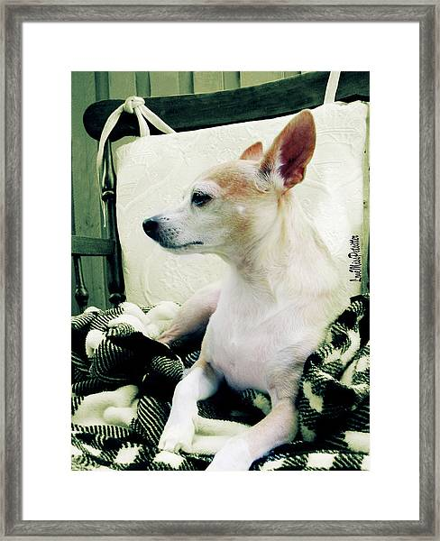 Chihuahua  Portrait  Framed Print