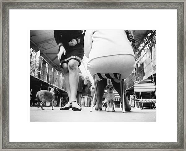 Chihuahuas Framed Print