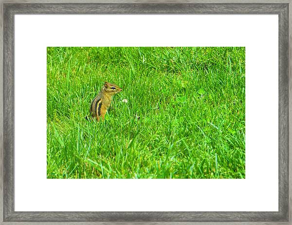 Chipmunk And The Flower Framed Print