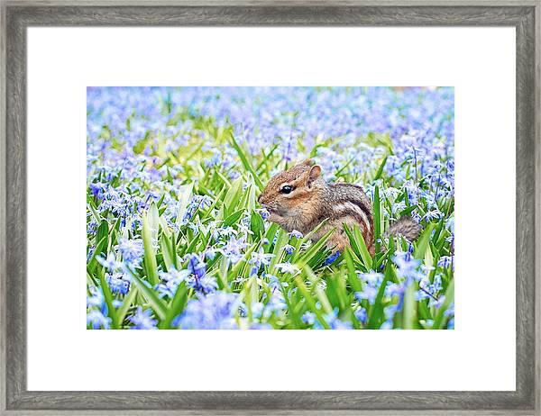 Chipmunk On Flowers Framed Print