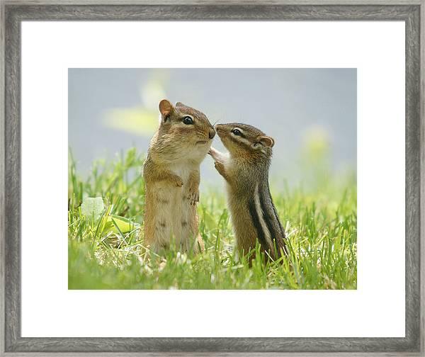Chipmunks In Grasses Framed Print