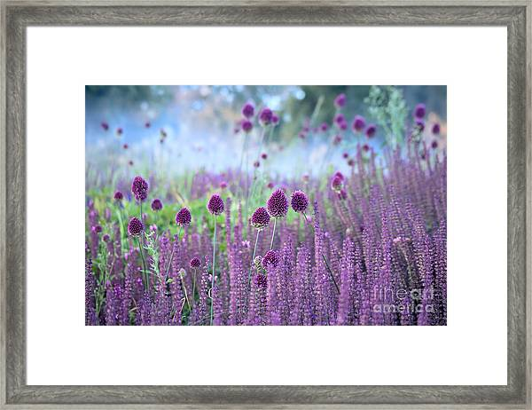 Chive Herb Flowers - Allium Framed Print