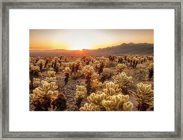 Cholla Garden Framed Print