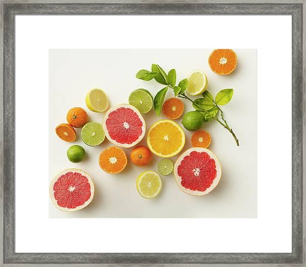 Citrus Variety Framed Print
