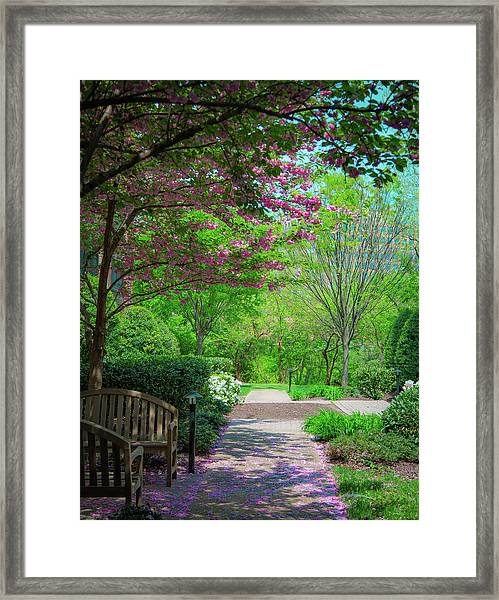 City Oasis Framed Print