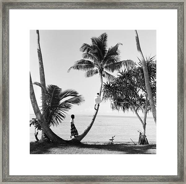 Climbing For Coconuts Framed Print