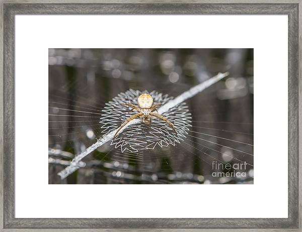 Close Up Macro Of Spider On Web Framed Print