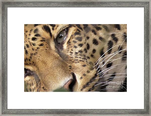 Close-up Framed Print