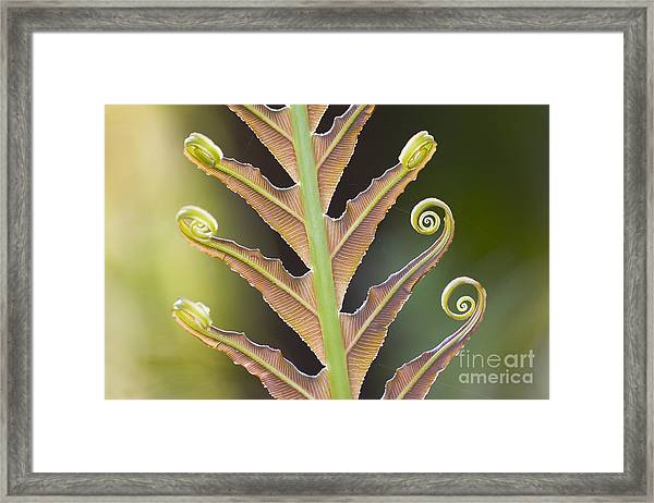 Close-up Of A Giant Fern On A Sunny Framed Print by Artmannwitte
