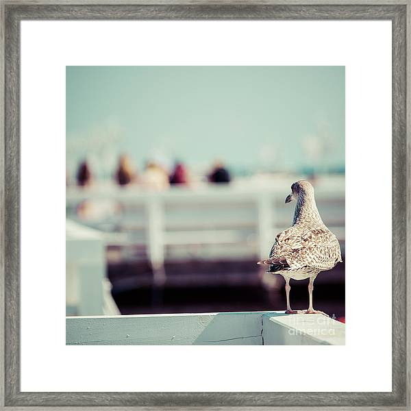 Close-up Of A Seagull In Sopot Pier Framed Print