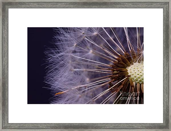 Close-up Of Dandelion Seed Framed Print