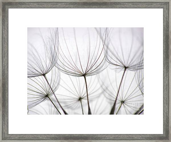 Close-up Of Dandelion Seed With An Framed Print