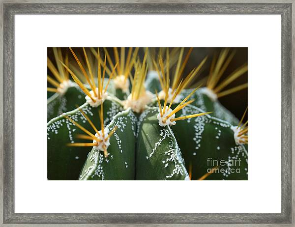 Close Up Of Globe Shaped Cactus With Framed Print