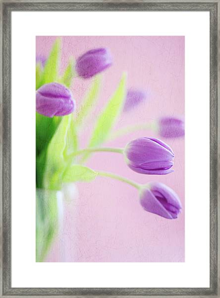 Close Up Of Purple Tulips Framed Print