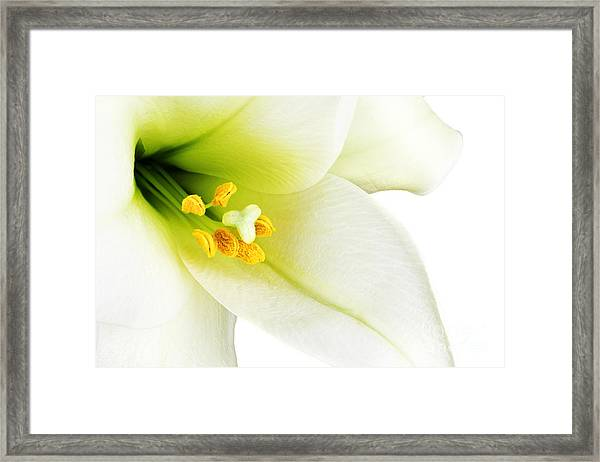 Close-up Of The Inside Of A White Lilly Framed Print