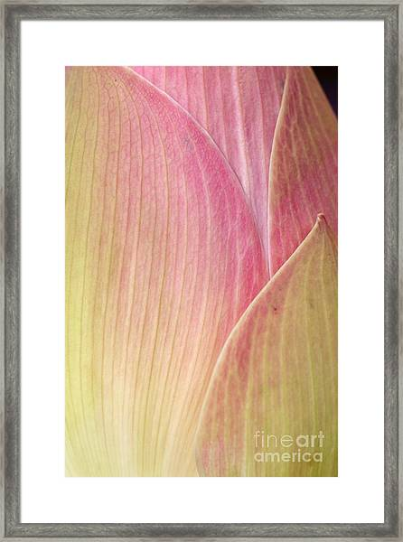 Close-up Photo Of The Lotus Framed Print