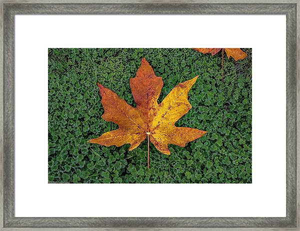 Clover Leaf Autumn Framed Print