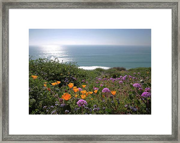 Coastal Bouquet Framed Print by Robin Street-Morris