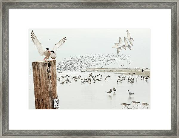 Coastal Habitat With Shorebirds Framed Print