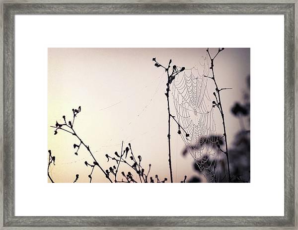 Cob Webbed Framed Print