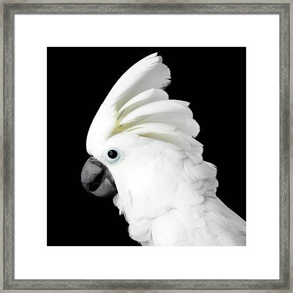 Cockatoo Alba Framed Print