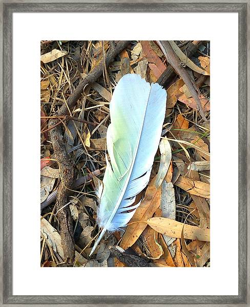 Cockatoo Token Framed Print