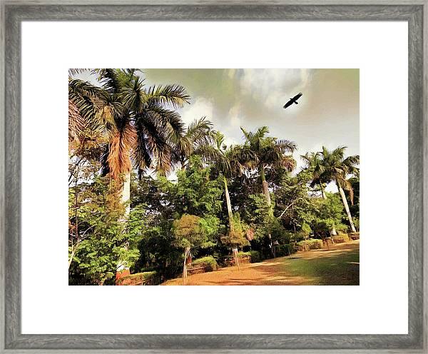 Coconut Trees Framed Print