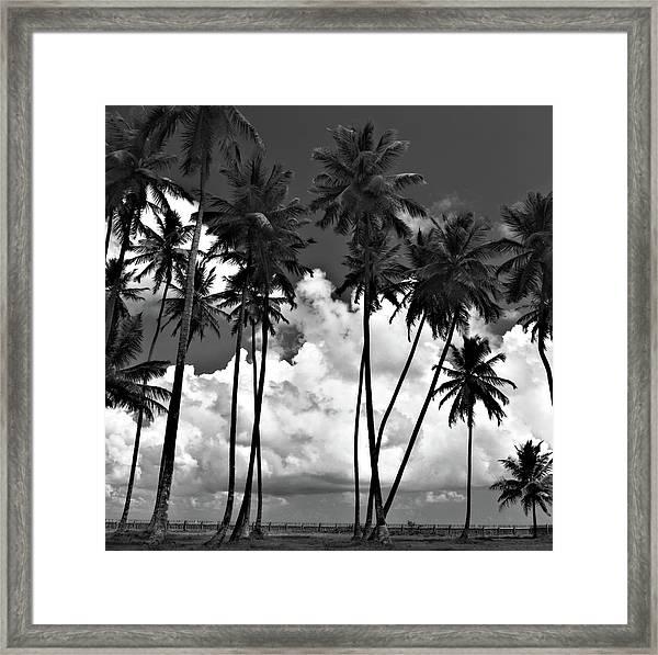 Coconut Trees At Mayaro Framed Print