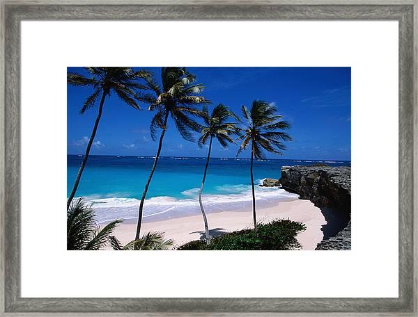 Coconut Trees Cocos Nucifera And Bottom Framed Print