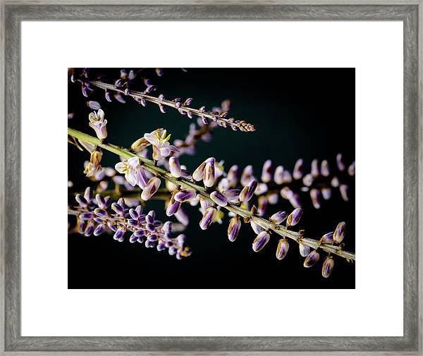 Cocoons Framed Print