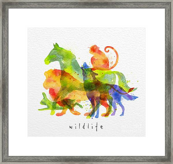 Color Animals ,horse, Wolf, Monkey Framed Print